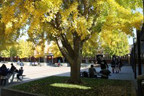 quad peaceful fall yellow trees.JPG